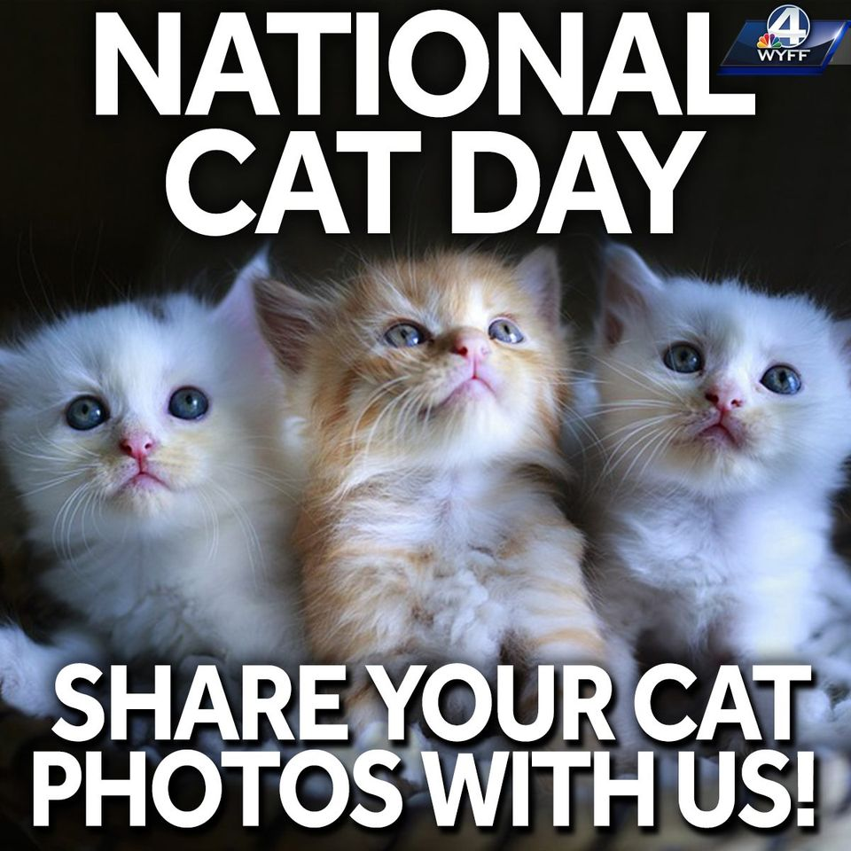 National Cat Day Wishes Awesome Images, Pictures, Photos, Wallpapers