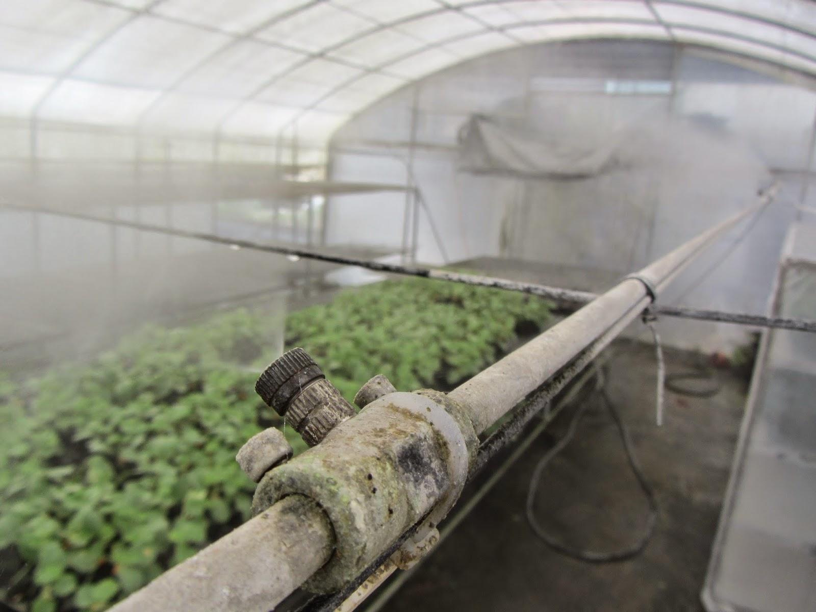 Estudiando agricultura en taiw n negocio de pl ntulas for Nebulizadores de agua