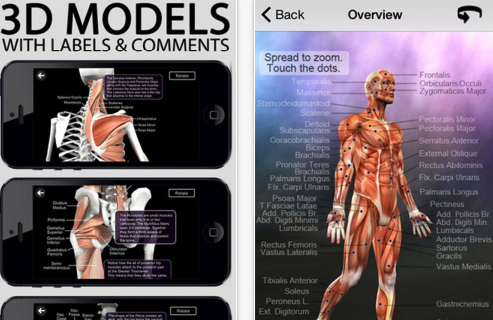 7 Of The Best Ipad Apps For Learning Human Anatomy In 3d