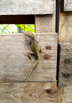 Close up of lizard on fence