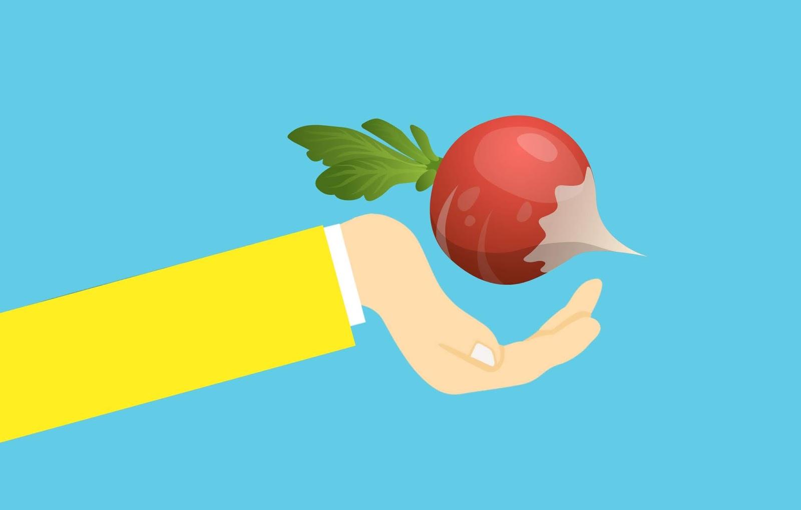 radish, plant, food, red, vegetable, hand, vitamin, nutrition, cartoon, harvest, tuber, organic, cooking, meeting, fresh, healthy, green, purple, agriculture, leaf, harvesting