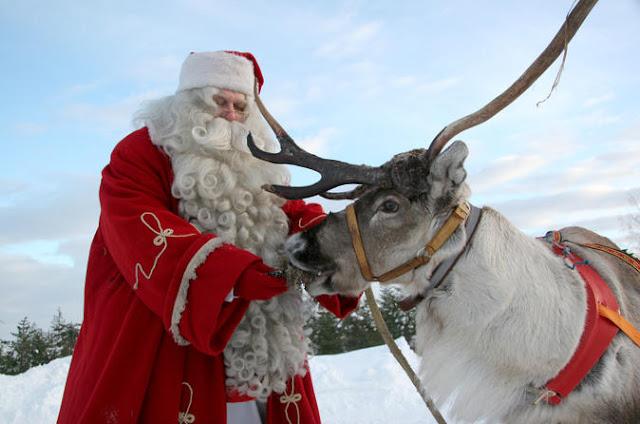Santa Claus feeding a reindeer in Lapland