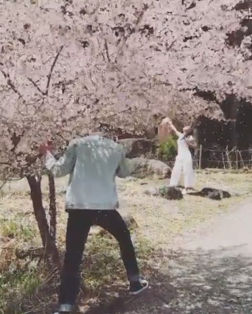 Netizens Bash Daniel Padilla For Violating the Japanese Cherry Blossom Tree Rule Just For Selfies: 'Walang Modo, Sobrang Pasaway!'