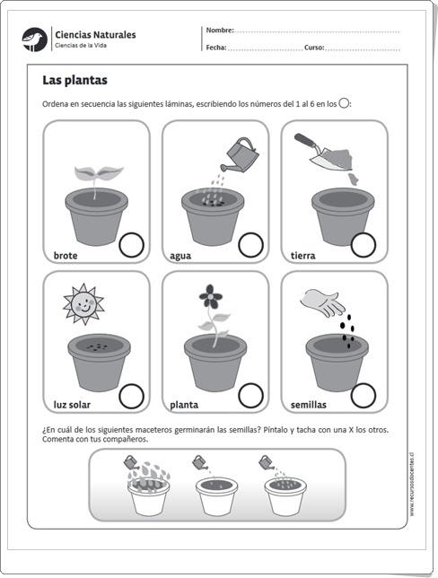 """""""Las plantas y su reproducción"""" (Ficha de Ciencias Naturales de Primaria)"""