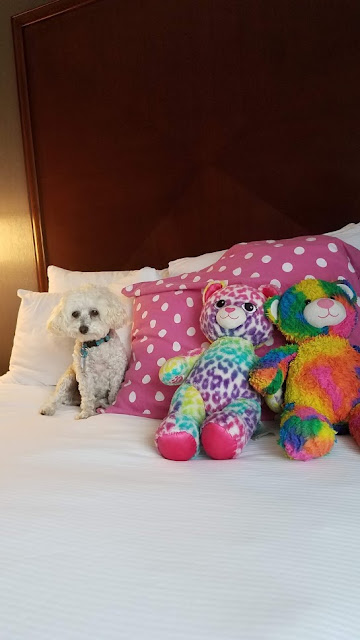 Andy the Poodle at the DoubleTree Biltmore in Asheville, NC