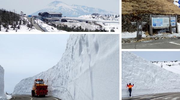 日本東北︱岩手縣.八幡平雪之迴廊,媲美立山黑部的高聳雪牆