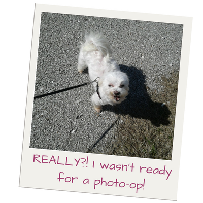 Lexi, #lexithemaltese1, On My Kindle Book Reviews