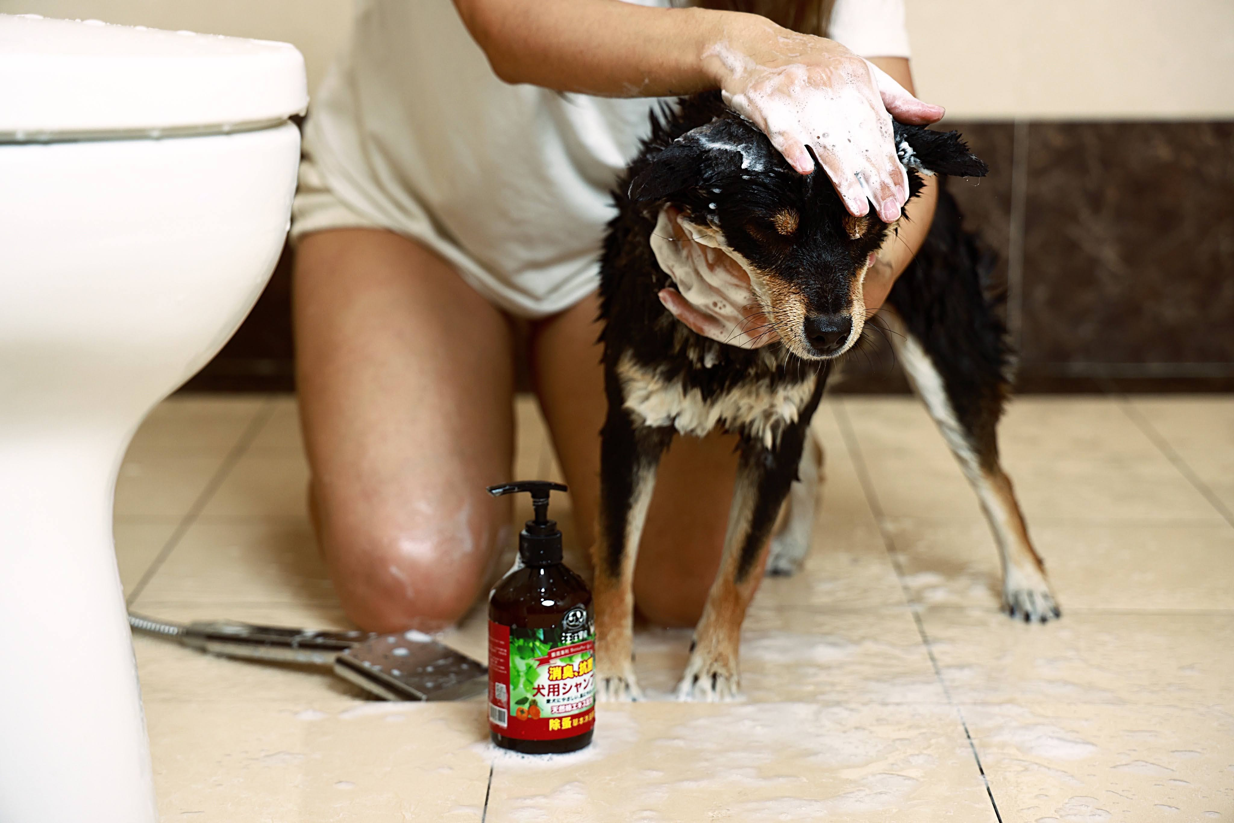 貓咪洗澡推薦_汪汪寶貝