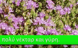Tα περισσότερα Μελισσοκομικά φυτά και ο μήνας ανθοφορίας τους VIDEO