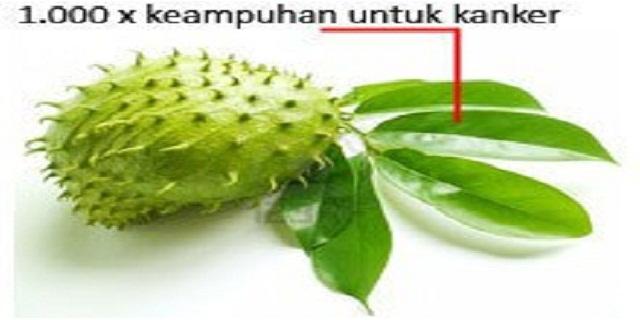 manfaat daun sirsak untuk kanker