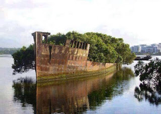 102 year old abandoned ship is now a floating forest. Hutan terapung