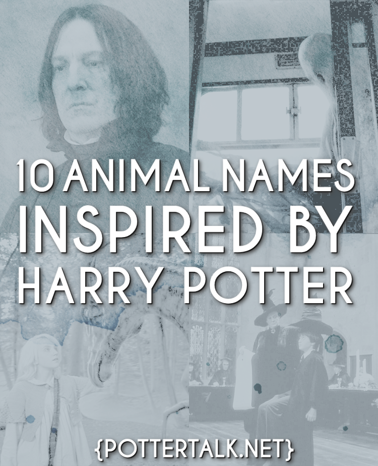 Animals Named After Harry Potter Books