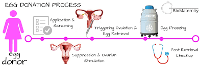 Attain out Regarding The Egg Donation Process