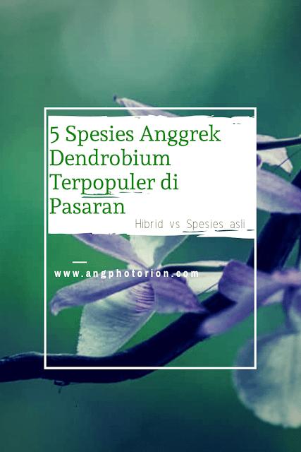 Jenis Anggrek Dendrobium paling populer