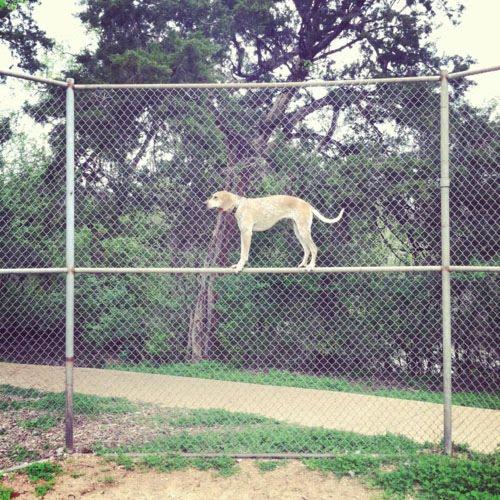 Maddie on chicken wire fence