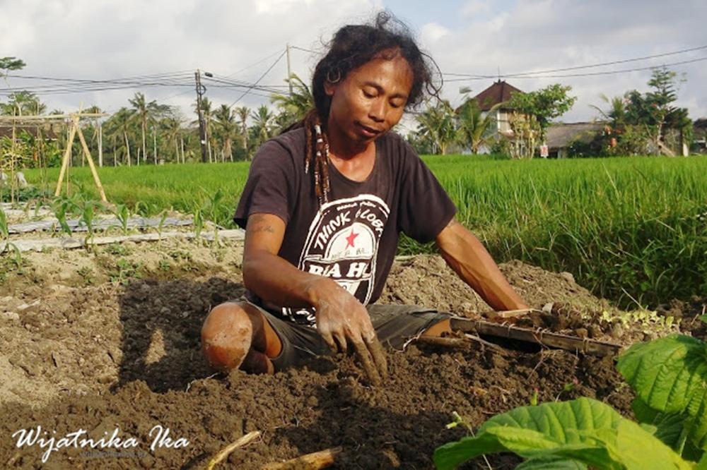 Bagi Hartono Lokodjoyo, Bertani Adalah Pekerjaan Membahagiakan