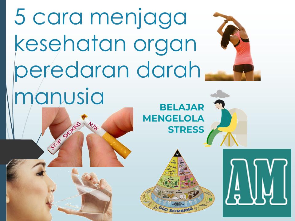 sebutkan minimal 5 cara menjaga kesehatan organ peredaran darah manusia