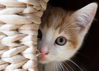 تفسير رؤية القط في المنام