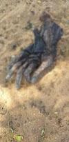 Mão humana é encontrada em estado de decomposição na zona rural de Ipueiras