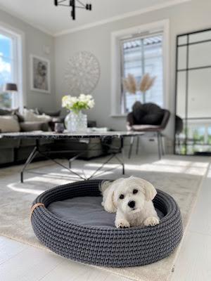 boutique de luxe pour chien