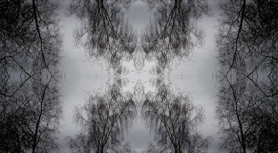 abstract, reflections, trees, birds, photography, background
