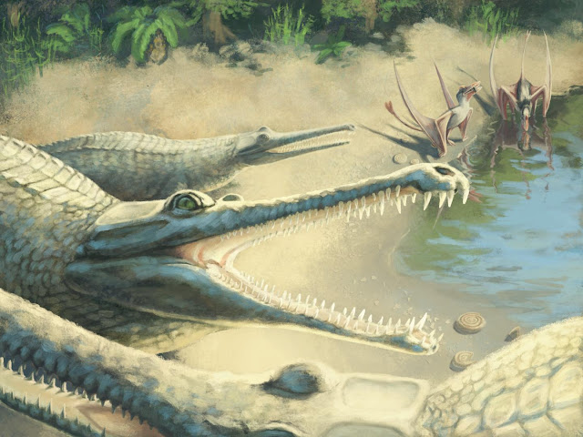 Mysterious Jurassic crocodile identified 250 years after fossil find