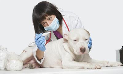 Detectando anomalías en la salud de un perro