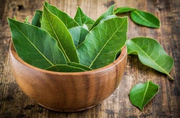 Daun Salam Mengandung Senyawa Vitamin Mineral Untuk Kecantikan dan Kesehatan