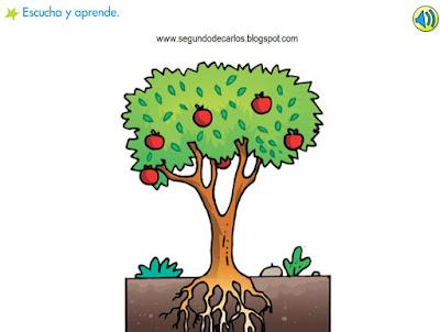 Segundomonsalud las plantas for Imagenes de las partes del arbol