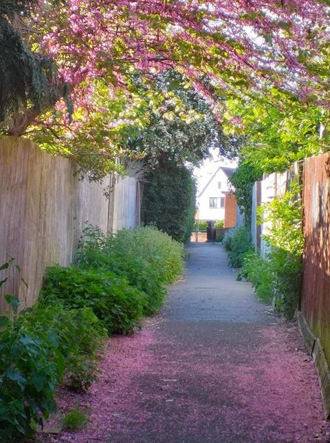 path covered in pink leaves