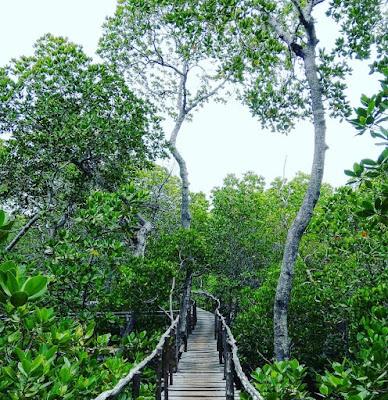Tempat Tujuan Destinasi Wisata di kota Balikpapan Hutan Mangrove