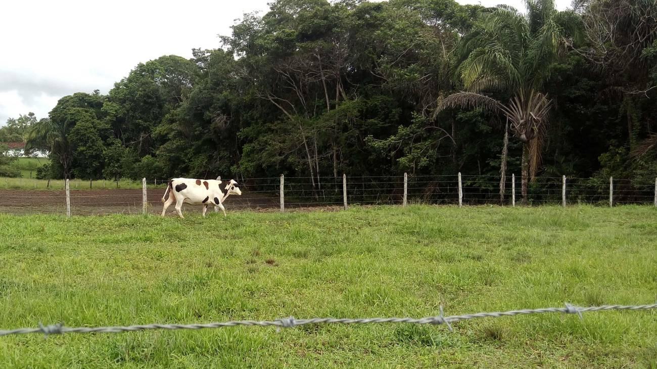 Mojuí atinge de 80% de adesão ao Cadastro Ambiental Rural, diz Emater