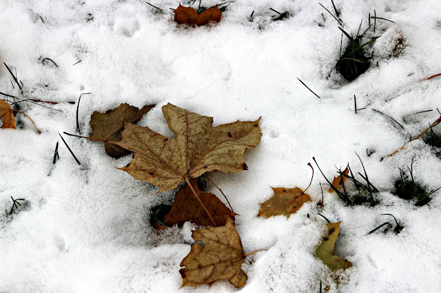 Watching the wind blow the leaves down on top of the snow