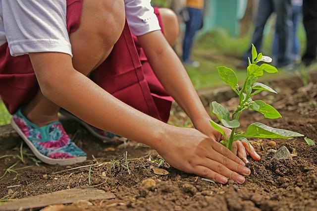 Inilah penjelasan Mengenai Hari Menanam Pohon Indonesia