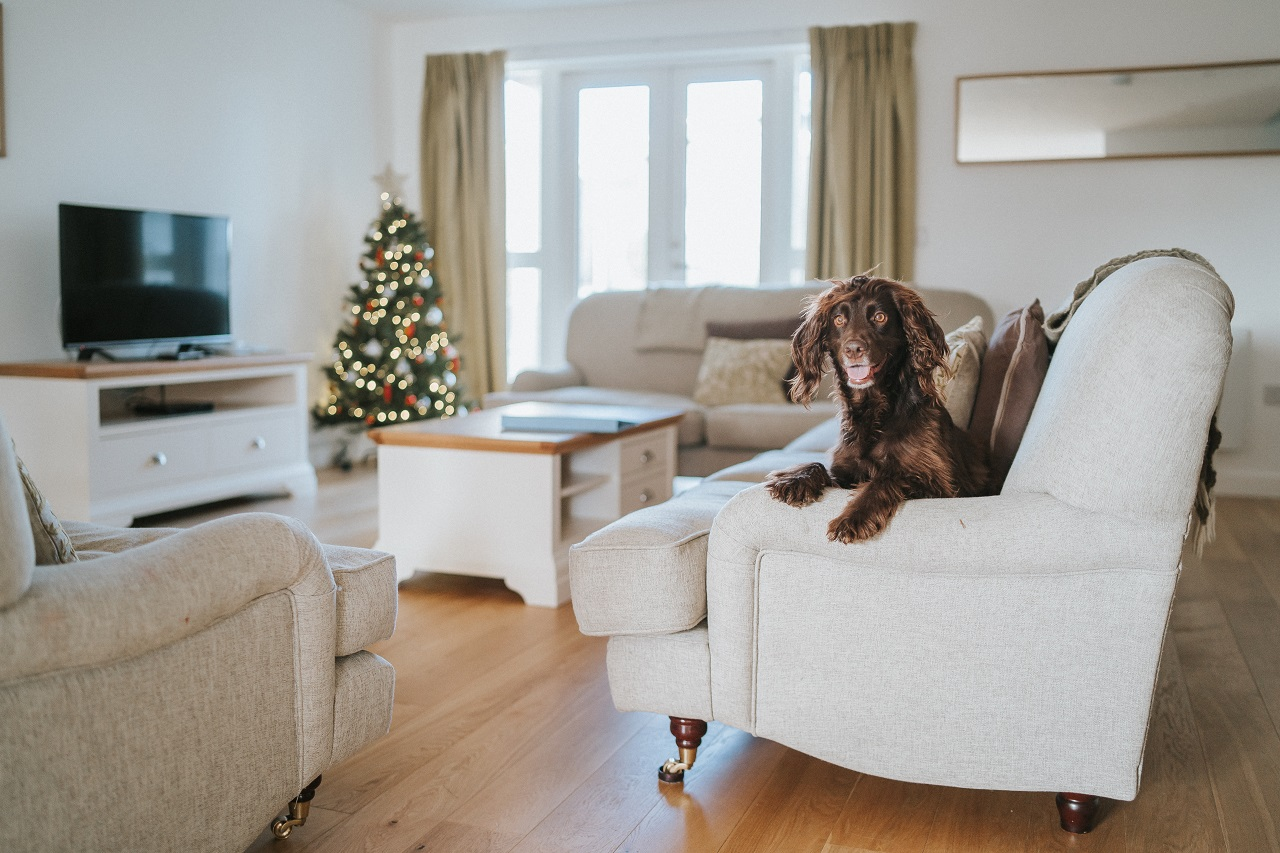 Dog Friendly Stay at Una St Ives