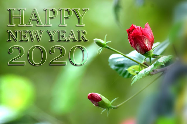 new year 2020 photo, new year 2020, 2020 wishes, 2020 greeting, 2020 facebook, 2020 message,