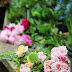 Ein Blumenjahr - Vom Hügel - Juni