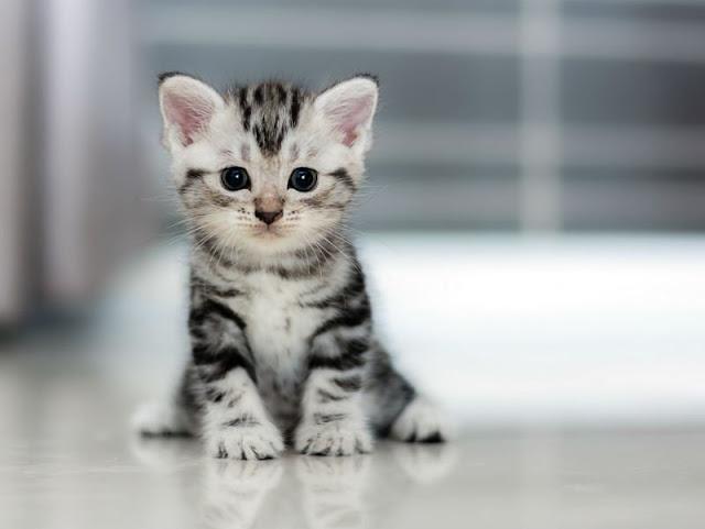 5 coisas que fazem um gato feliz!