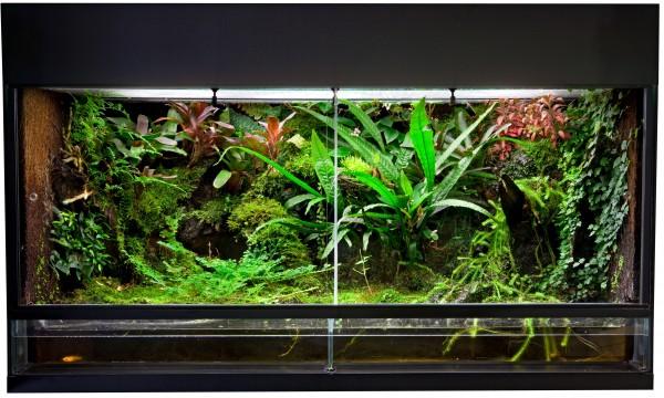 Différences entre les aquariums et les terrariums