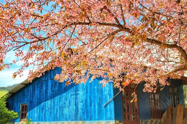 Chiêm ngưỡng vẻ đẹp tuyệt trần của vùng ngoại ô Đà Lạt 20