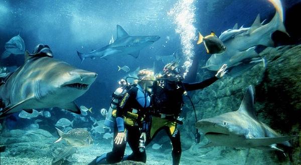 Tận hưởng cảm giác lặn sâu và chạm vào những chú cá mập tại S.E.A Aquarium
