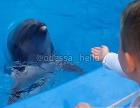 Dolphin bit a 6yr old boy's hand in Dolphinarium