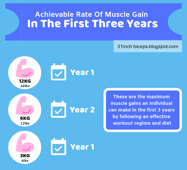 Achievable Rate Of Muscle Gain Annually