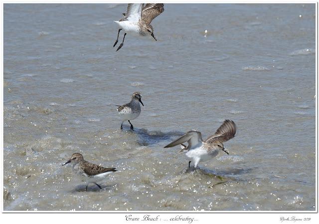 Crane Beach: ... celebrating...