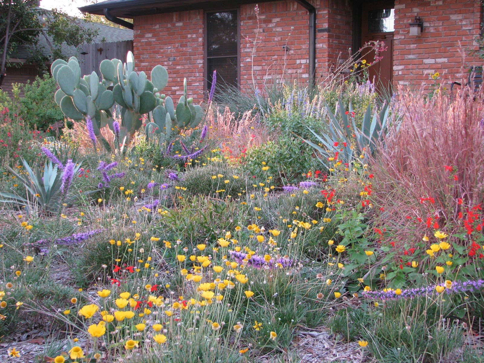 Plano Prairie Garden Summer Of 2011 Winners And Losers