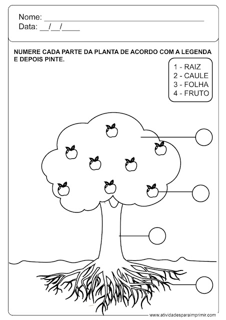 atividade dia da árvore