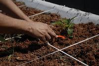 Agro%2BT%25C3%25A2nia%2BR%25C3%25AAgo%2BAbr.JPG