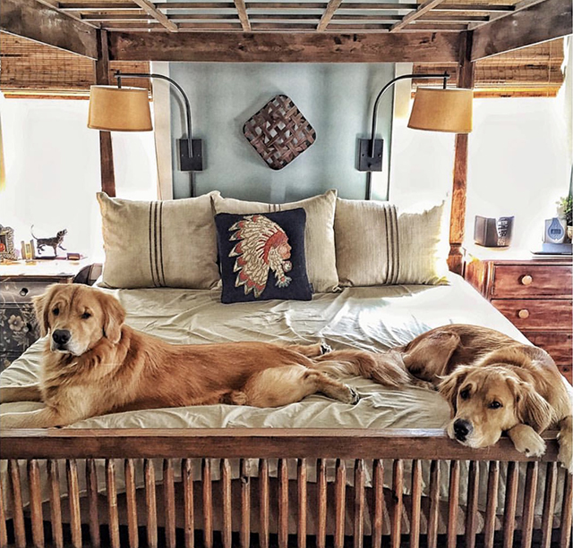 Golden Retrievers Bed