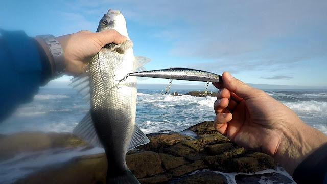 "PORTADA - Costa da Morte ""la pesca de la lubina en Galicia"""
