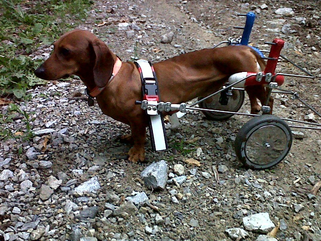 Gambarotella di cerri claudio carrelli artigianali per for Nomi per cagnolini di piccola taglia
